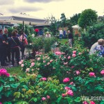 Roseunfest-2016 - 1 -_