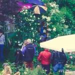 Roseunfest-2016 - 25 -_